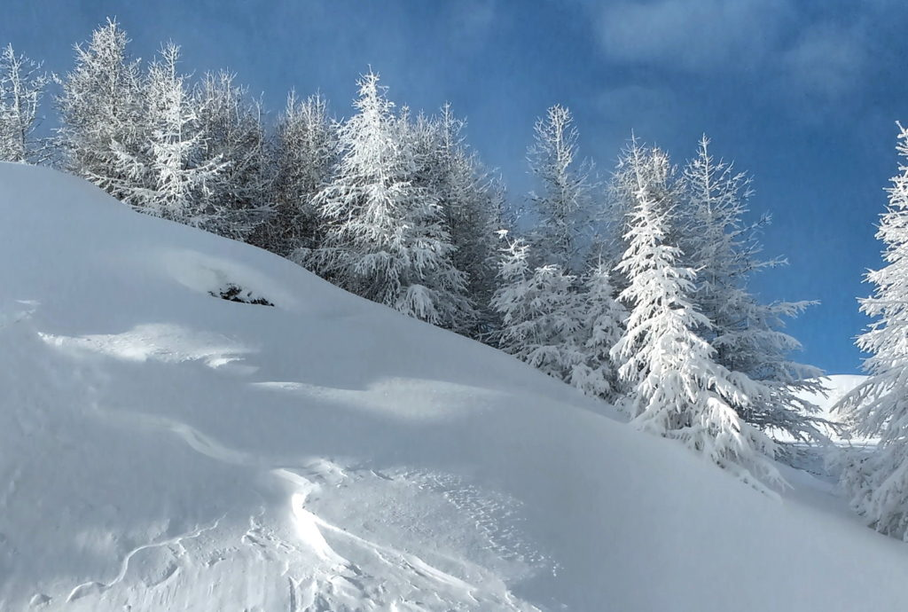 Les arbres blancs