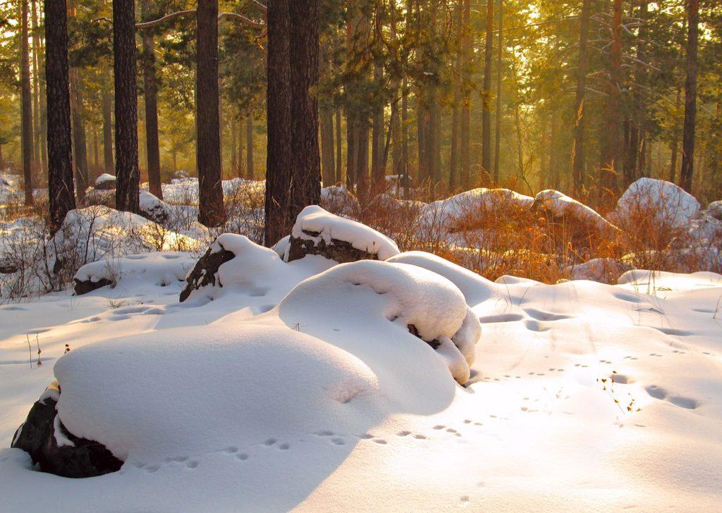 Dans les forêts de siberie