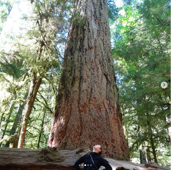 Cathedral Grove, Ile de Vancouver